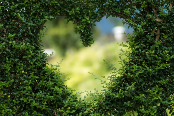 Supporting the planet - Hedge heart